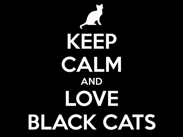 citát o černých kočkách